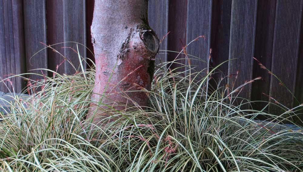 Karpers In Tuin : Japans geïnspireerde tuin met vijver vol koi karpers en kleine